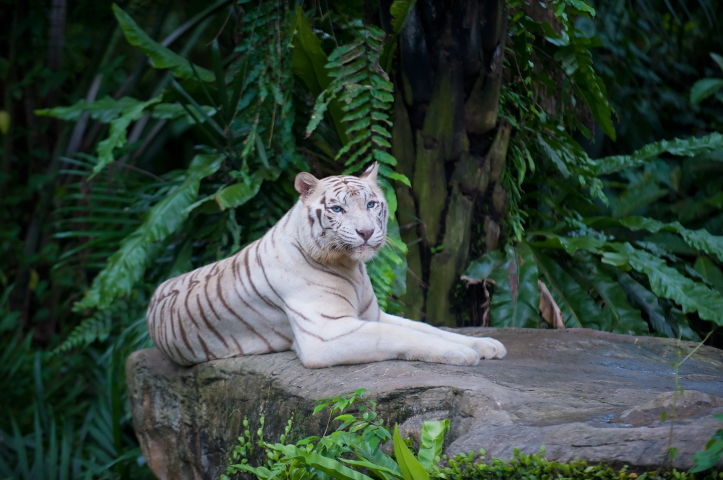 Visit Singapore Zoo and Night Safari