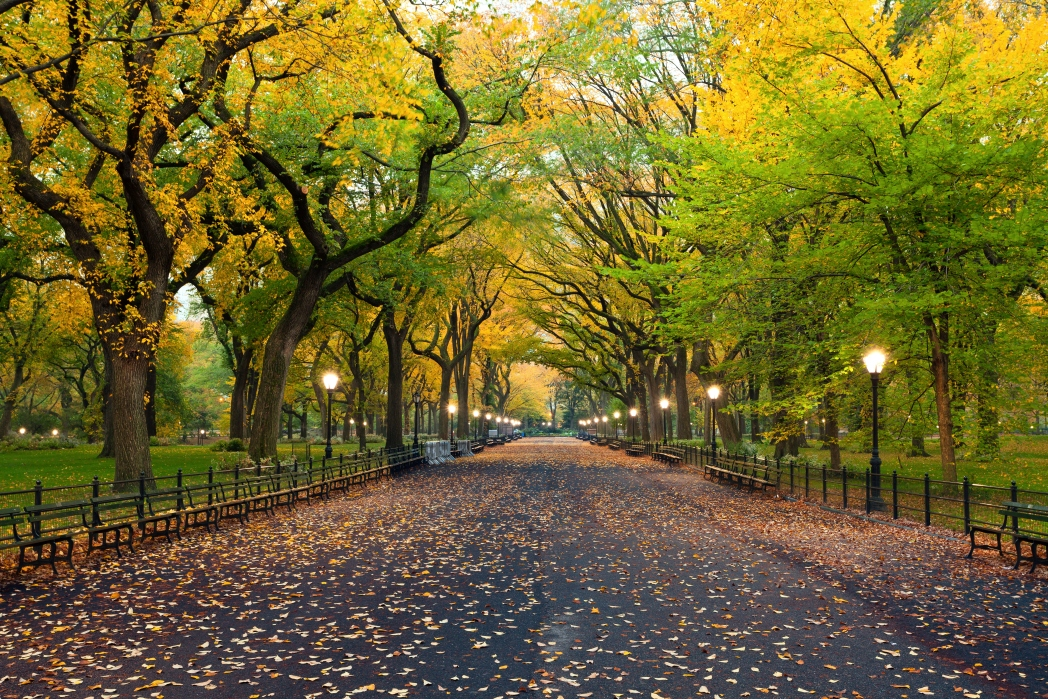 Central Park in New York turns every shade of orange in fall