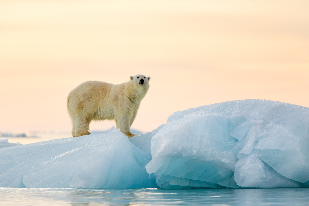 Polar bears are found in Norway