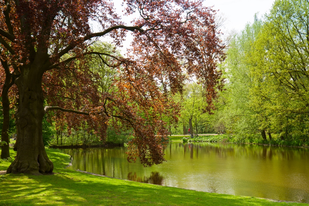 Take a walk through Vondelpark and spot sheep, parakeets and squirrels