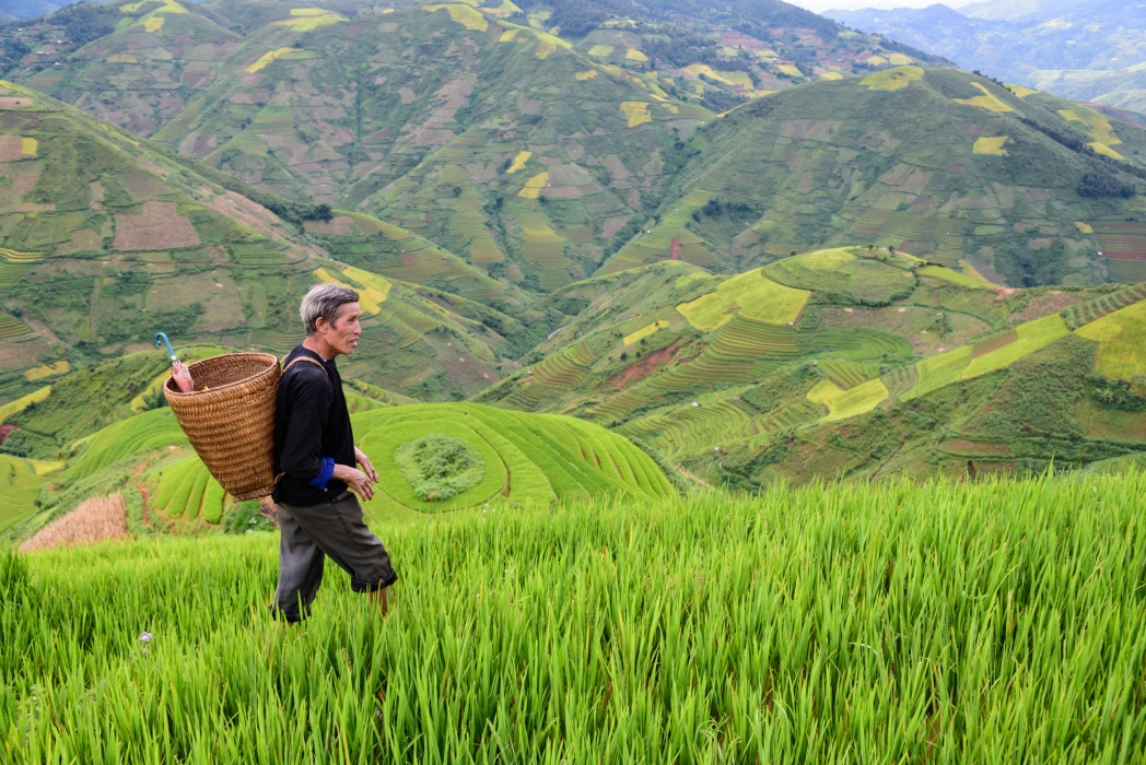 Go on a hike to see the rice fields in all their glory